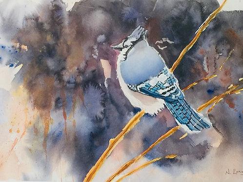 """""""Blue Jay"""" by Nancy Longmate"""
