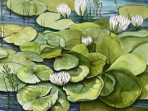 """Mill Pond Lilies"" by Darlene Selzer-Miller"