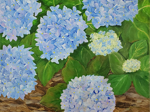 """Evening Hydrangea"" by Janice Silkworth"