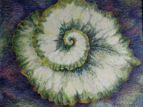 """""""Escargot Begoinia Rex"""" by Susan Wenger,"""