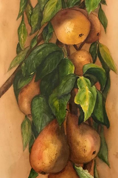 """""""Pear Branch"""" by Linda Flatley"""
