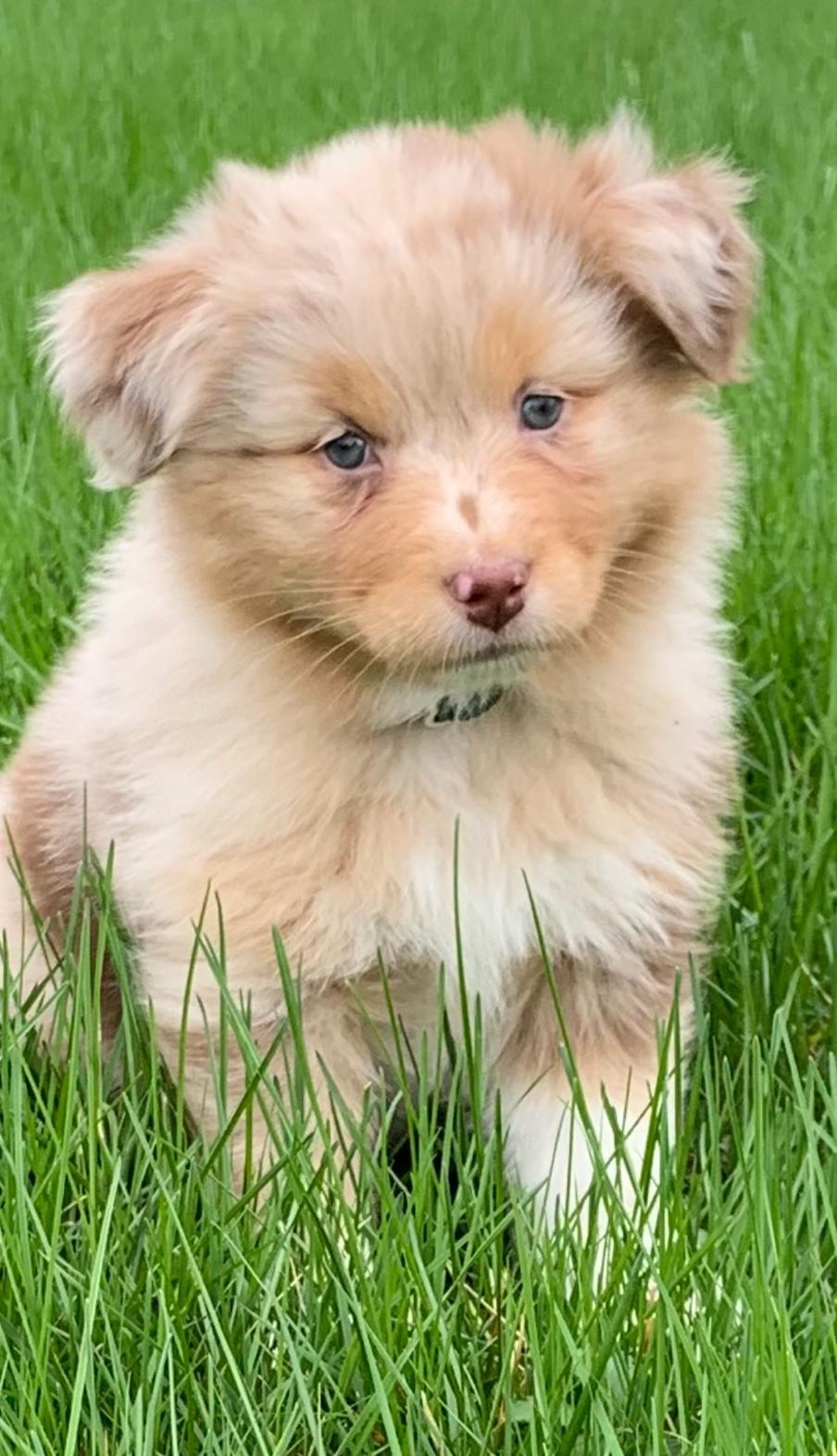 WTM Pup