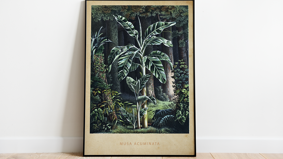 Vintage Jungle Poster, Musa Acuminata (Banana Tree)