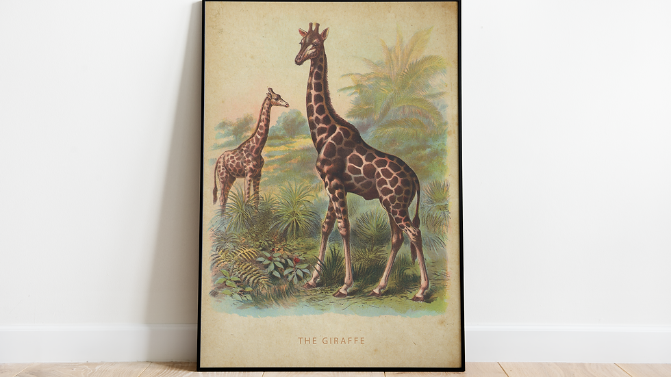 Vintage Giraffe Poster A2