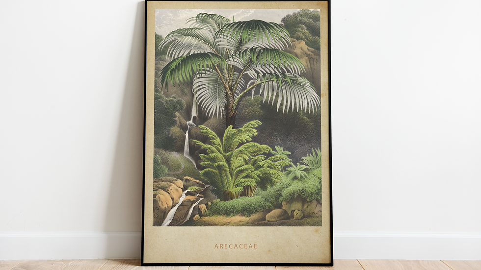 Vintage Jungle Poster, Arecaceae (Palm Tree)