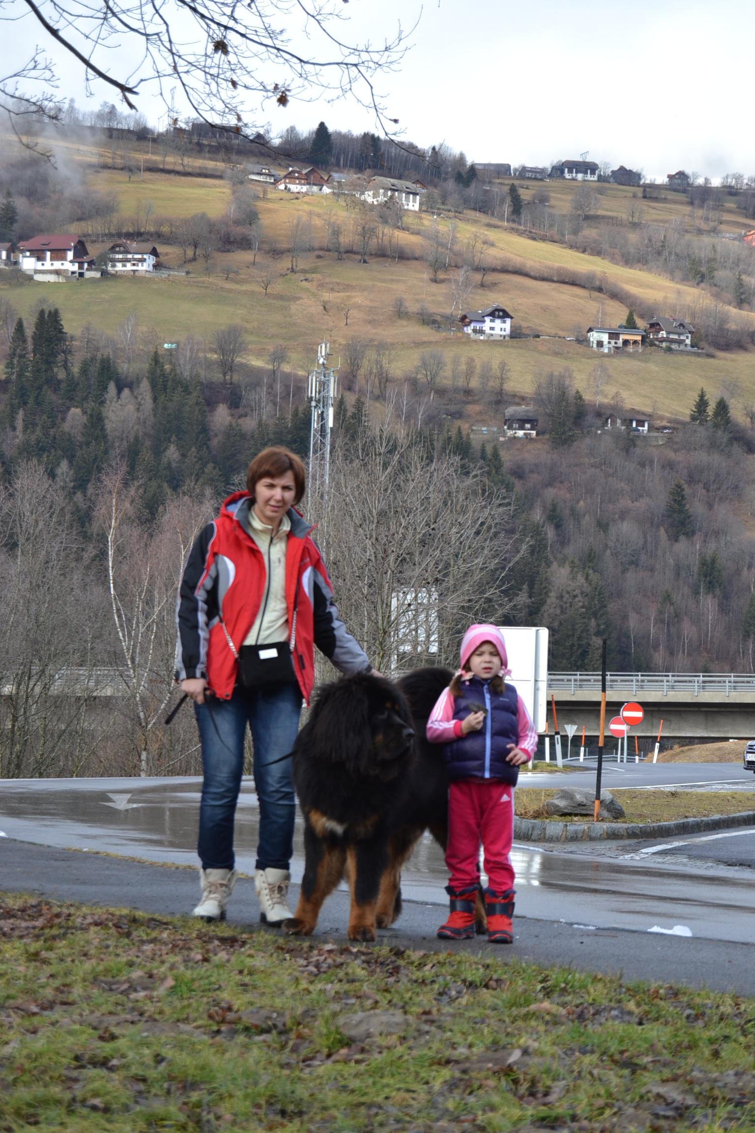 Австрия январь 2014