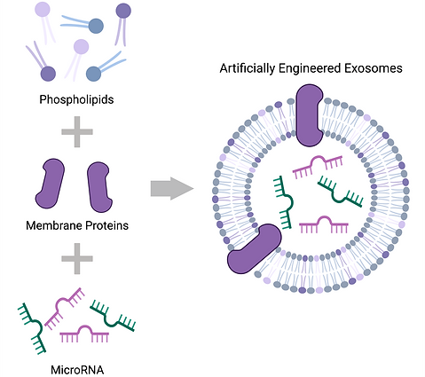 Engineered exosome.png