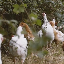 fosse-meadows-farm-the-art-of-meat-suppl
