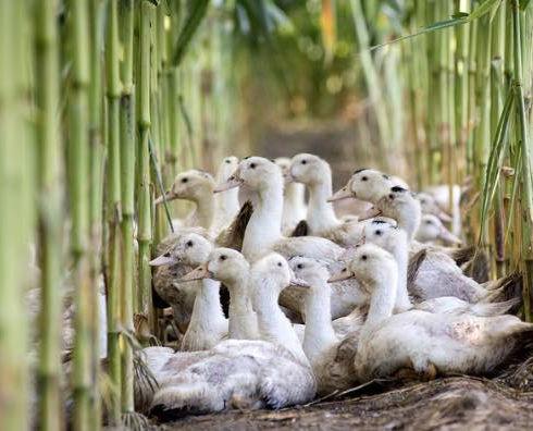 mr-duck-supplier-the-art-of-meat-min.jpg