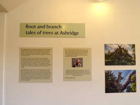 Exhibition at Ashridge Forest – Root and branch: tales of the trees at Ashridge