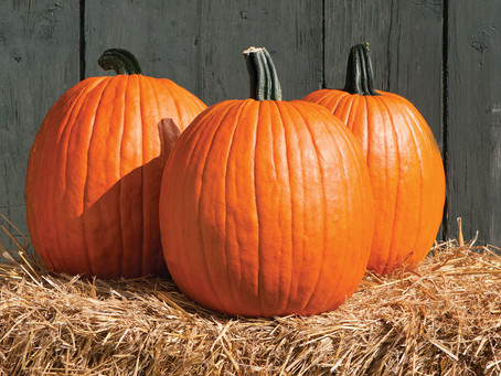 Why Pumpkin Should Be A Staple Year Round!