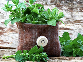 The Surprising Ways Catnip Can Benefit Your Sleep, Skin Health and More