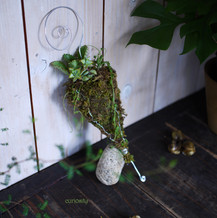 Succulent Story.jpg