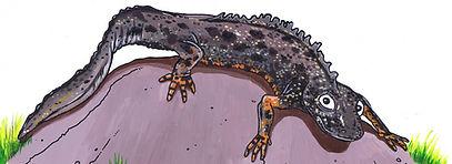 newt (3).jpg