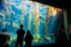 Birch Aquarium Bass.png