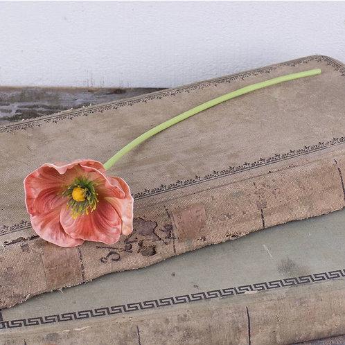 Coral Poppy Stem