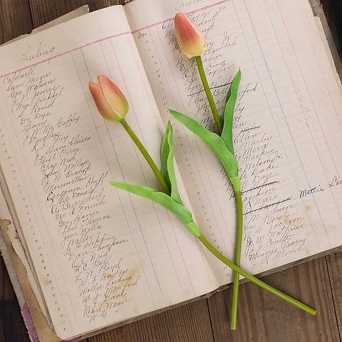 Tulip Stem