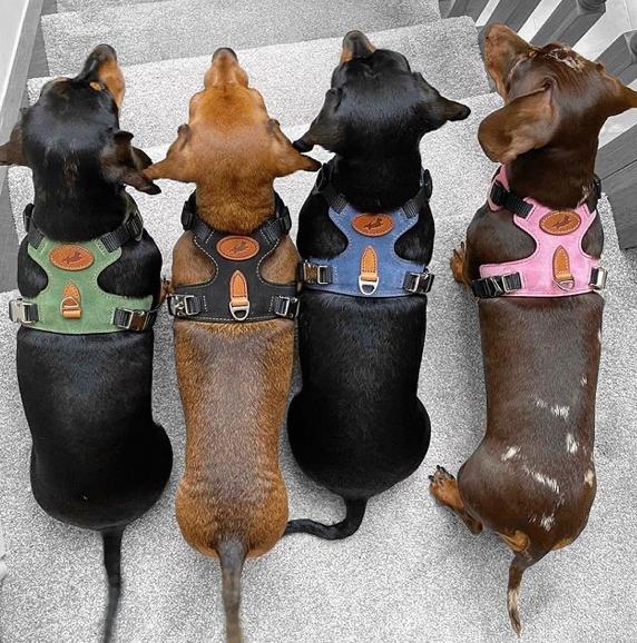 British Made Leather Dog Harnesses