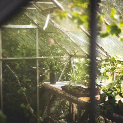 greenhouse-691704_1920.jpg