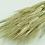 Thumbnail: Preserved barley/wheat bunch