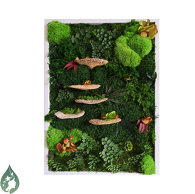 Ferns & Mushrooms forest