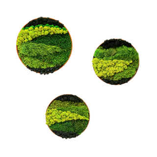 Preserved Moss circles
