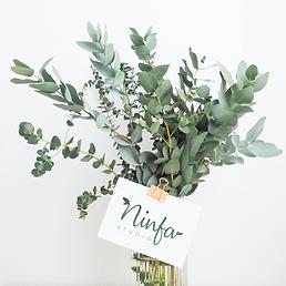 Ninfa Studio Eucalyptus.png