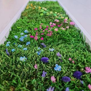The Flower Plot moss art