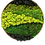 Thumbnail: Moss circles