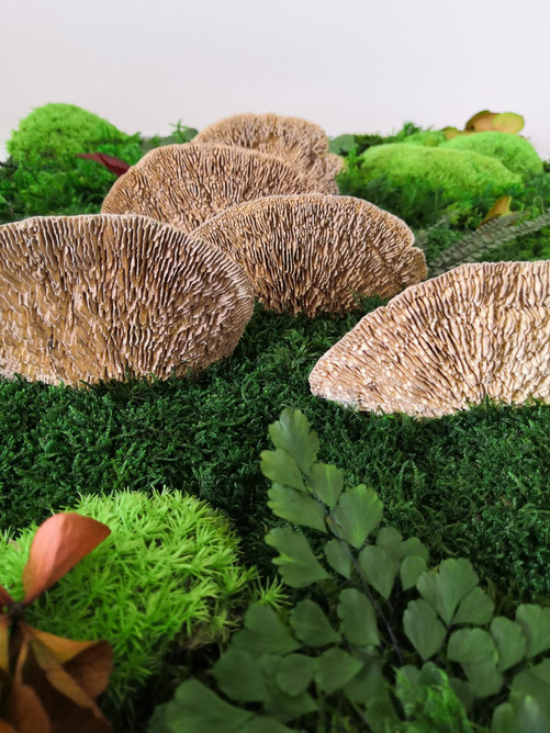 Ferns and mushroom forest