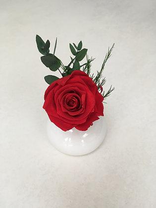 Single rose in vase