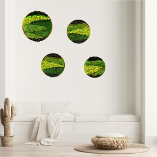 Preserved moss round frames