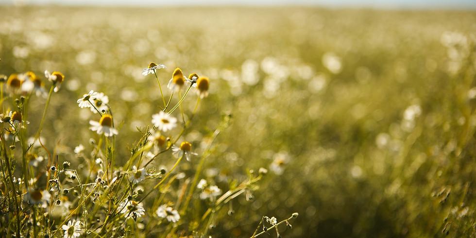 Nervines & Adaptogens: Herbs for Strengthening the Nervous System