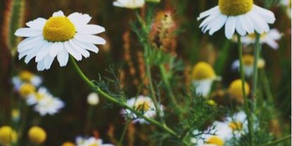 Mama Medicine: Herbs to Reduce Stress