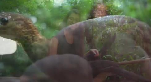 Video Parque das Aves