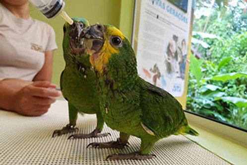 Ingresso Parque das Aves