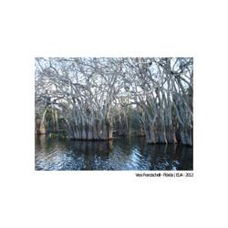 Vera Francischelli - Everglades - Florida - EUA - 2012