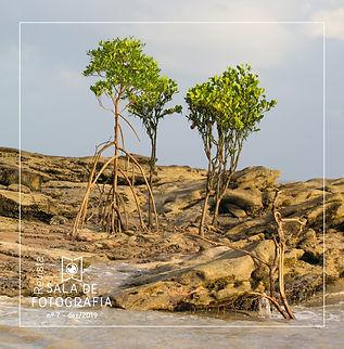Revista Sala de Fotografia n7