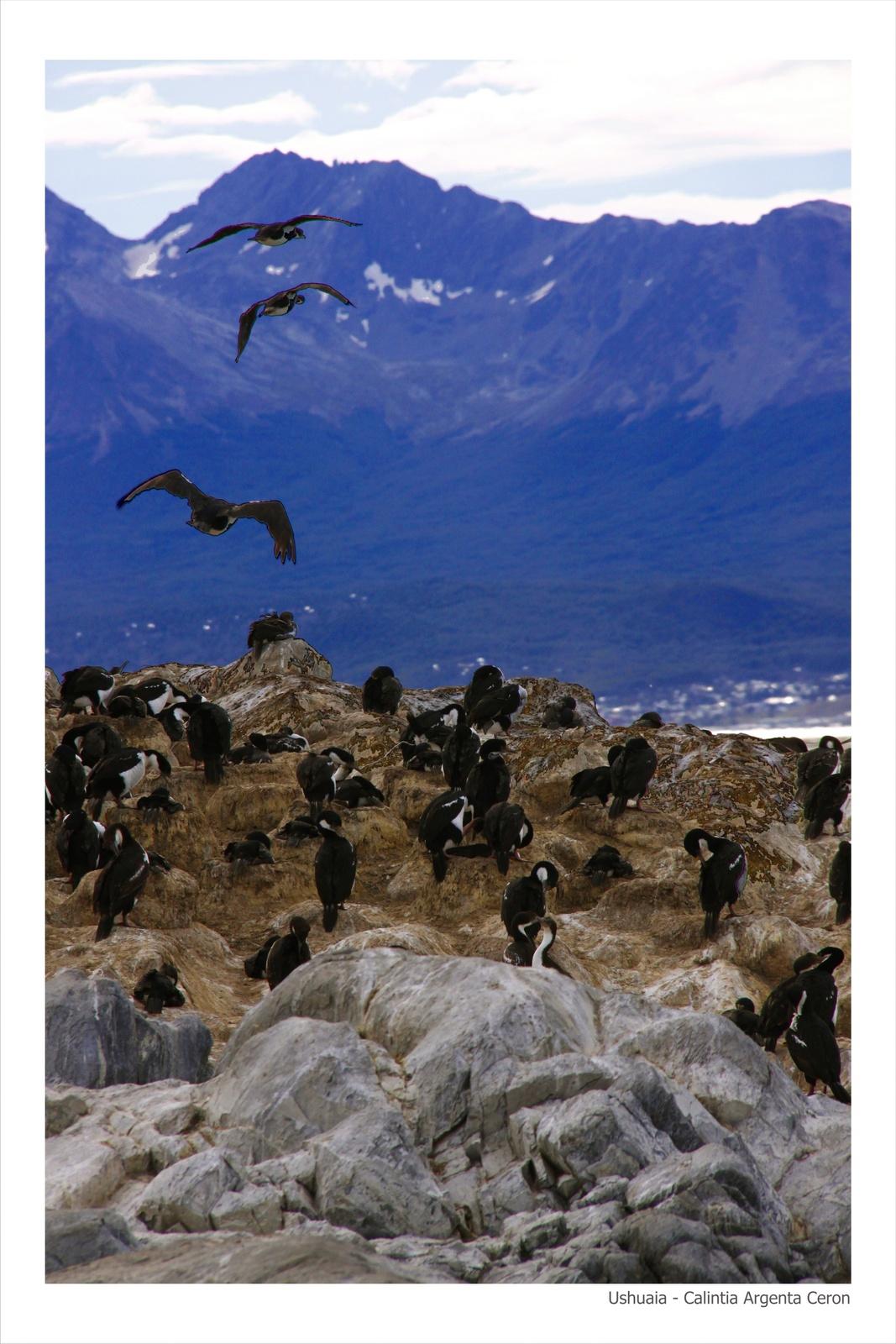 Ushuaia - Calintia Argenta Ceron - 30-45
