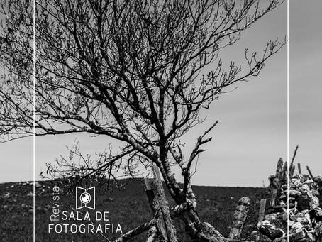 Sala de Fotografia lança revista online