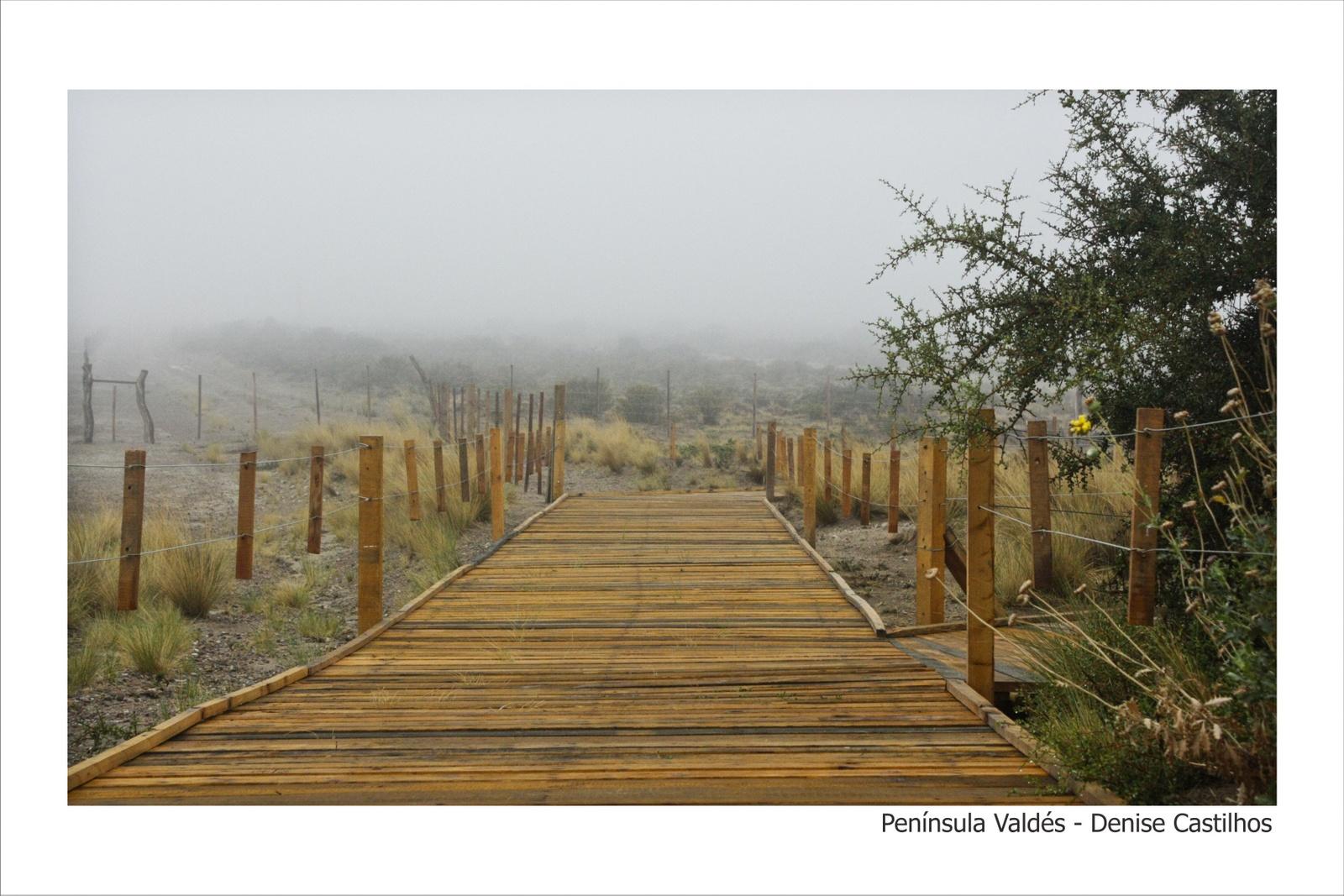 Península_Valdés_-_Denise_Castilhos_-_20-30