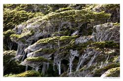 Ushuaia - Calintia Argenta Ceron