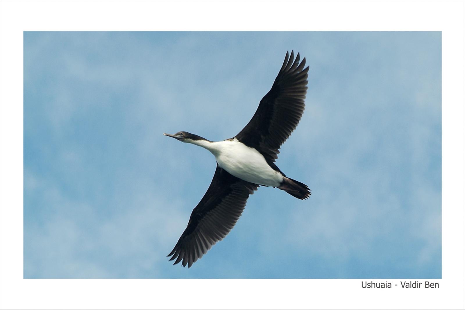 Ushuaia - Valdir Ben - 20-30