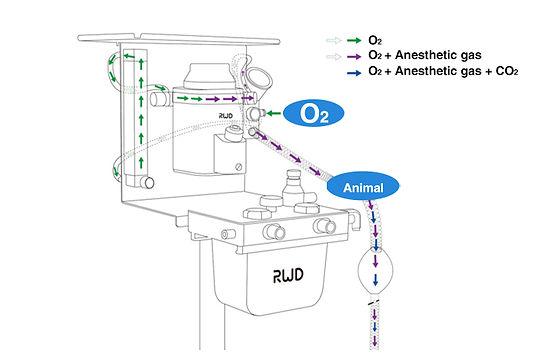 Non-rebreathing System Airway Diagram.jp