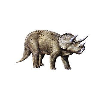 triceratopsdino2.jpg
