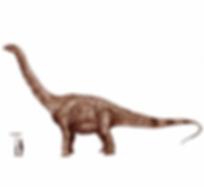 ruyangosaurus2.png