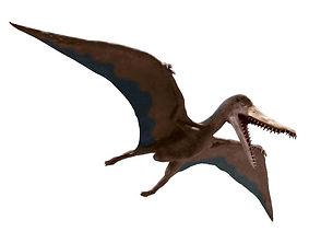 cearadactylus.jpg