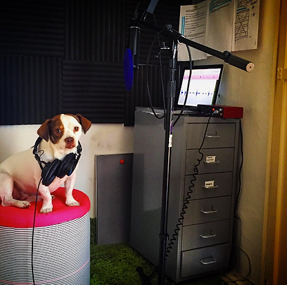 A very professional audio engineer who also happens to be a dog model named Peter