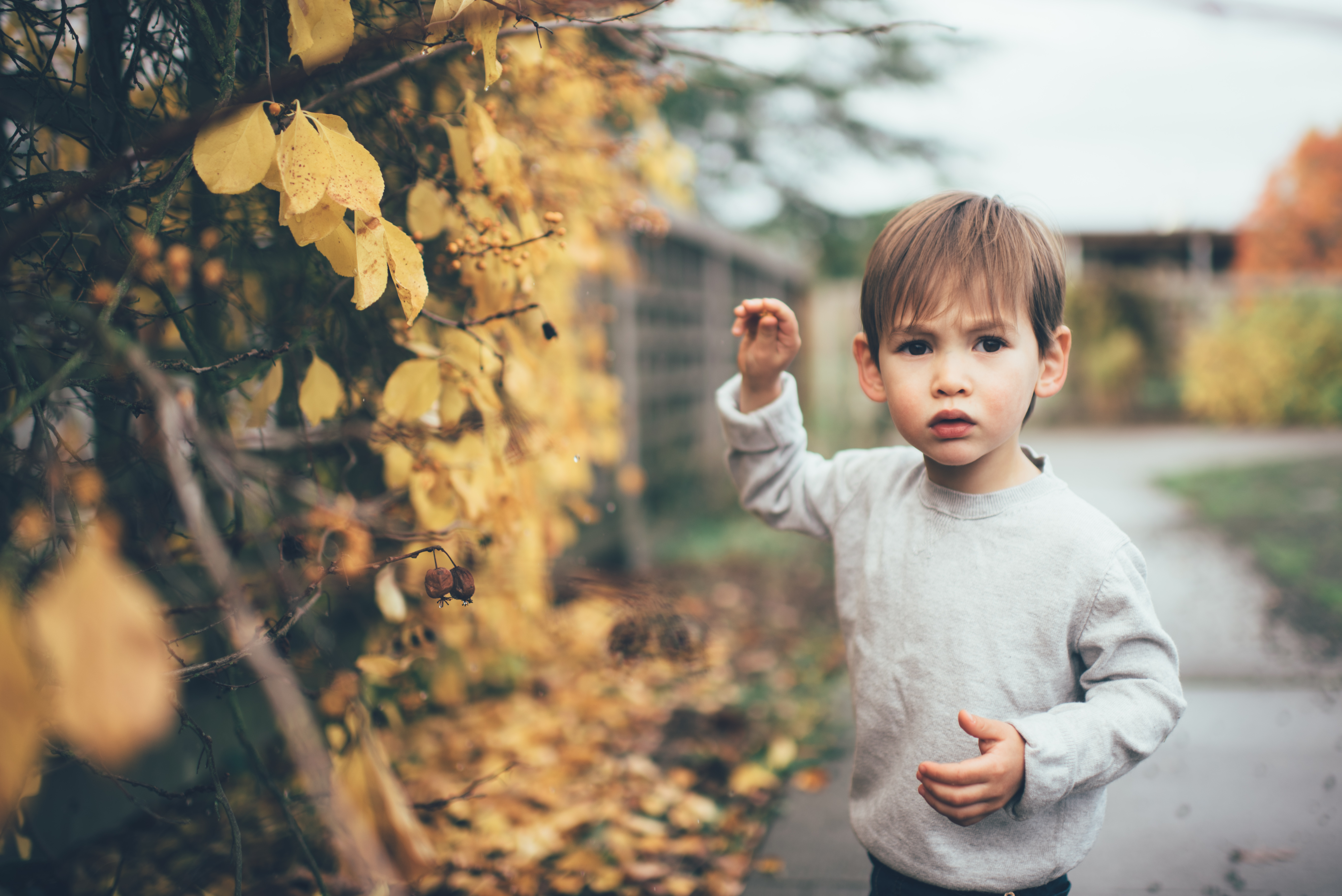adorable boy playing with leaves