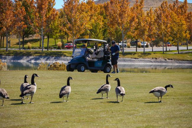 golf 2019 f-11.jpg